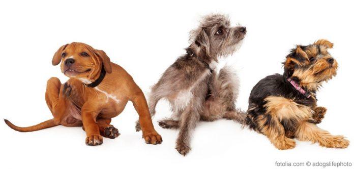 Hunde Allergie