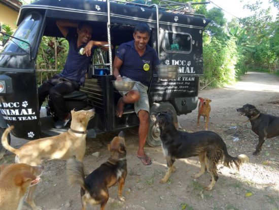 Straßenhunde Fütterung in Sri Lanka