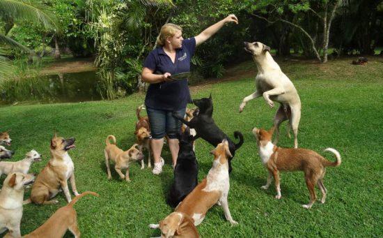 Straßenhunde in der Dog Care Clinic