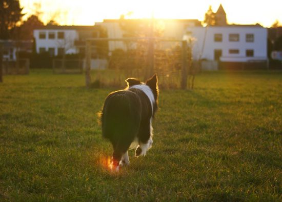 Hund Barney Sonnenuntergang