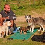 Camping mit Hunde in Salzburg