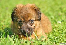 Privater Tierkauf via Internet verboten
