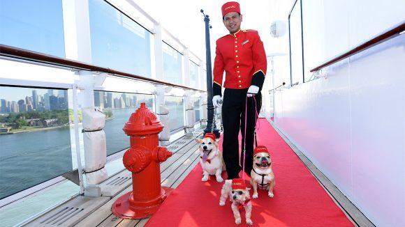 Hunde auf Kreuzfahrt mit der Queen Mary 2