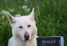 """Die """"beaglephile"""" Schnuppe"""