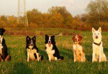 Gruppenbild Hunde