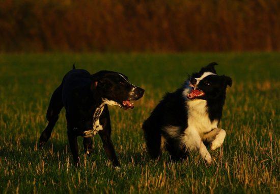 Hunde kommunizieren