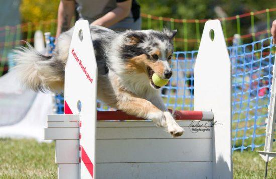 Cottbus Hundesport