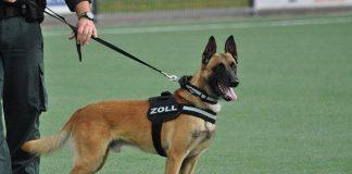 Zollhund