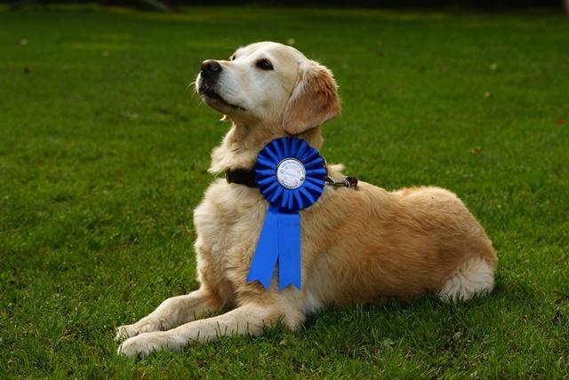 Turnier Auszeichnung Hund
