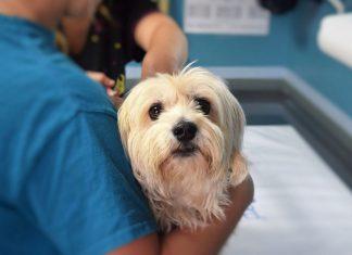 Hund Tierarzt