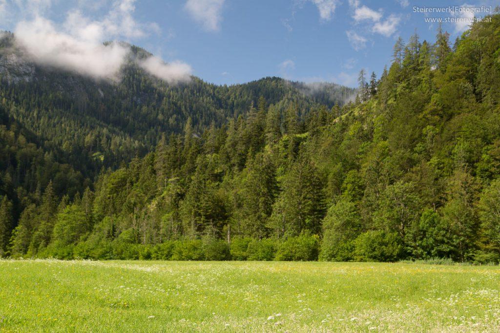 Wiesen & Wälder in Österreich