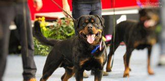 Listenhunde in Wien