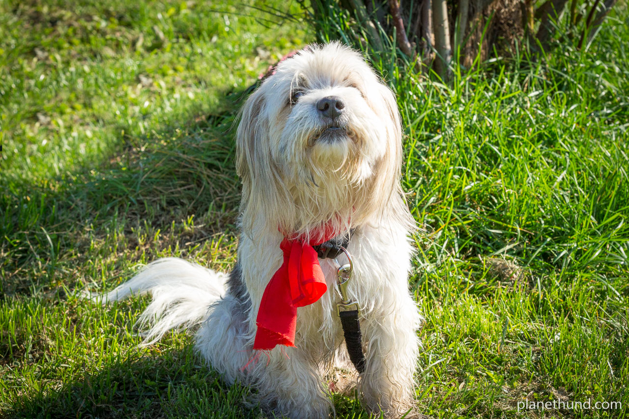Durchfall Beim Hund Symptome Ursachen Heilung Planet Hund