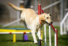 Agility Turnier Hund
