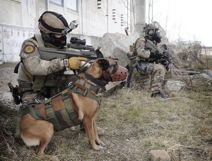 Bundesheer Militärhund