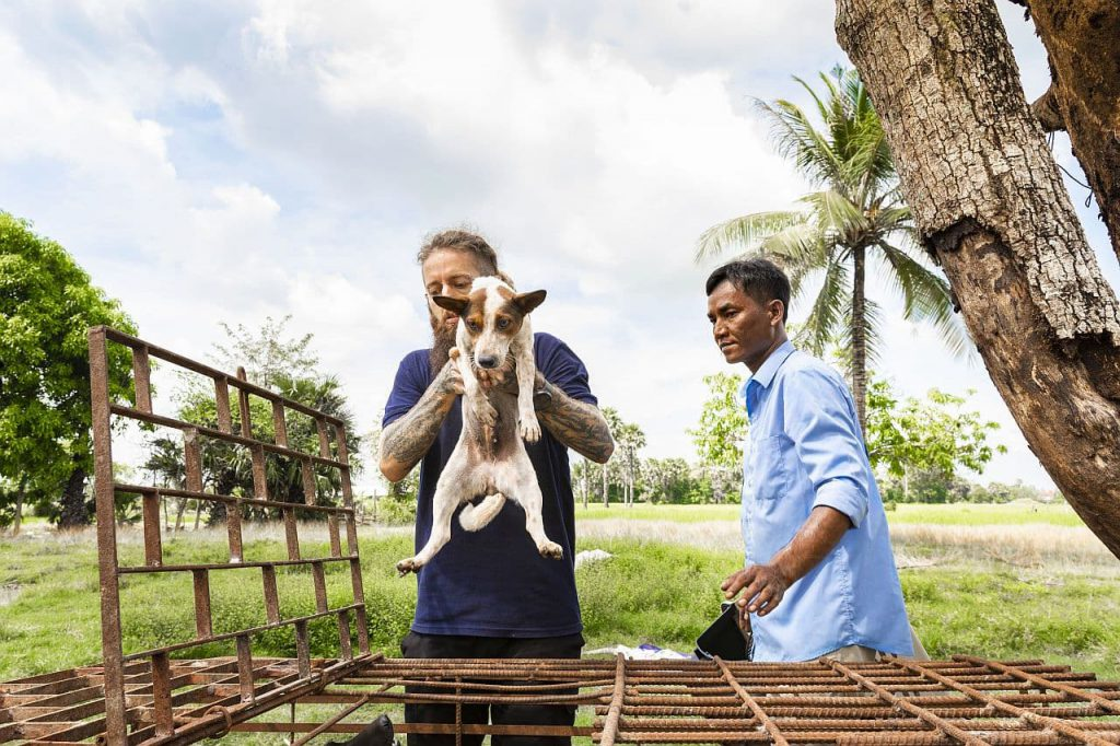 Hunde Rettung Kambodscha
