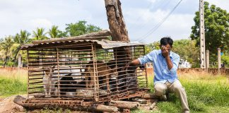 Hunde Schlachthaus Kambodscha