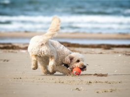 Hundeurlaub in Dänemark