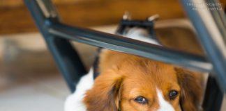 Hund beschäftigen bei Coronaviruss Ausgangssperre