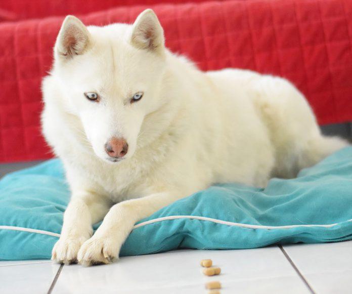 Hund Futterspiel