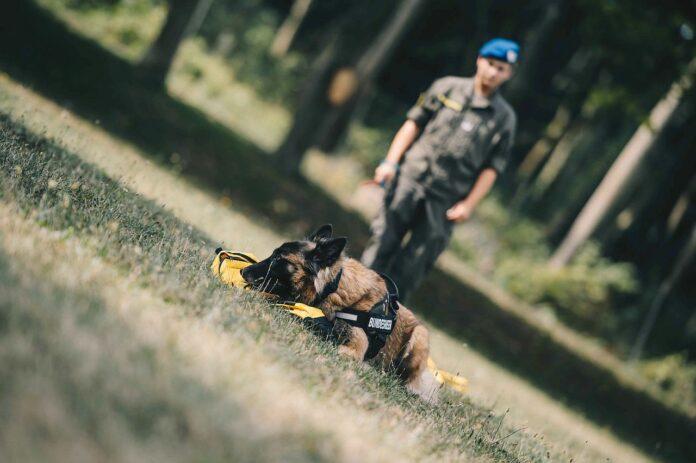 Corona Spürhund Bundesheer Ausbildung