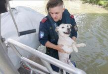 Hund Donau Wasserpolizei Rettung