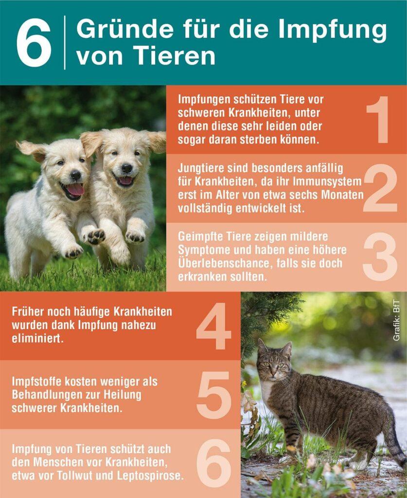 6 Gründe fürs Impfen von Hunden