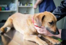Hund impfen