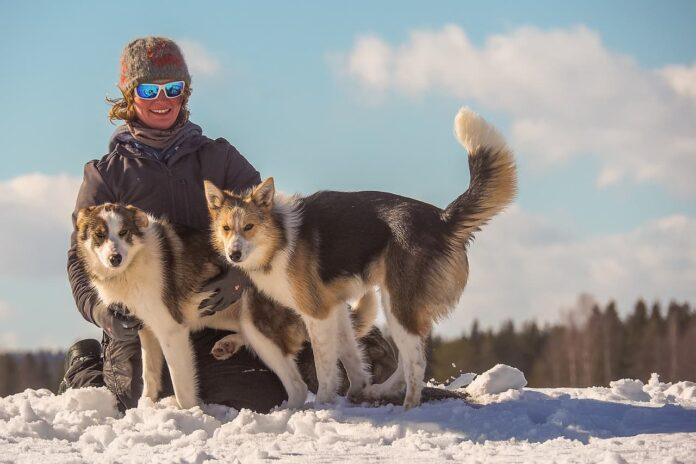 Leben mit Schlittenhunde
