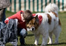 Hundeschulen Öffnung Protest in Deutschland