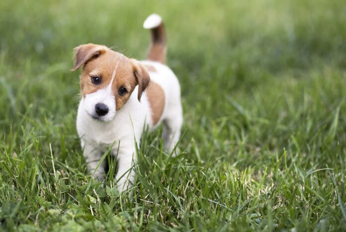 Hundetraining im Lockdown