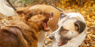 Hund beißt