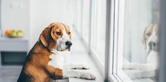 Hundeschulen in Deutschland weiter im Lockdown
