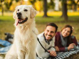 Mit der WOW Methode zum eigenen Hund