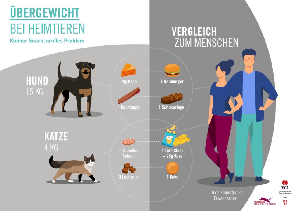 Übergewicht bei Heimtieren