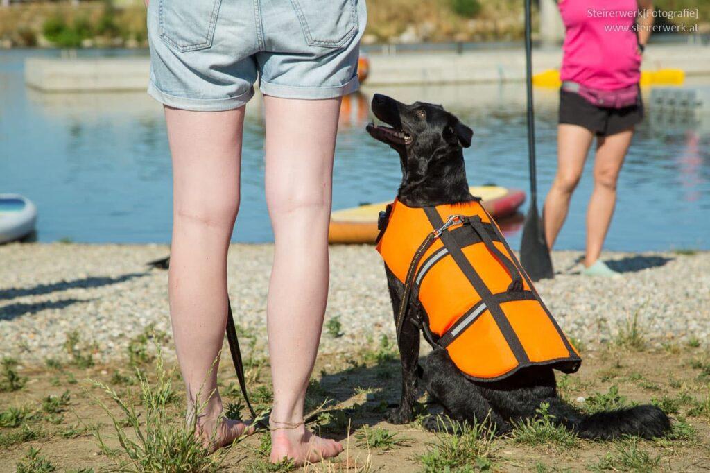 SUP mit Hund Übung