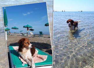 Hundestrand Caorle Bau Beach