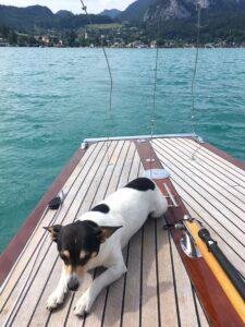 Hund am Segelboot am See