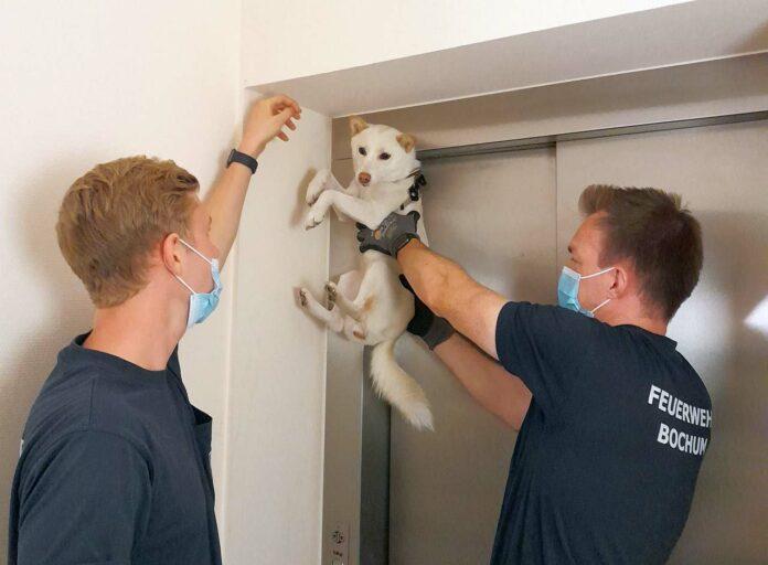 Hund Fahrstuhltür Bochum