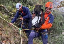 Hunderettung vom Untersberg